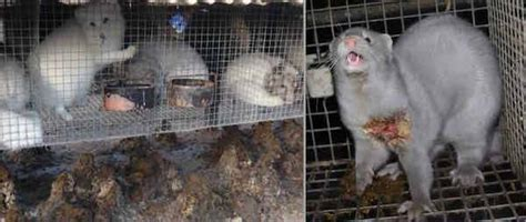 action needed fur    rise   creaturesorg