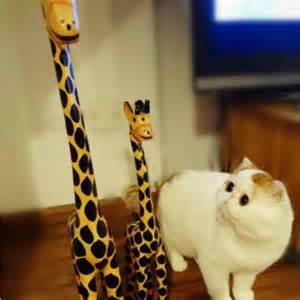 Flat-Faced Cat