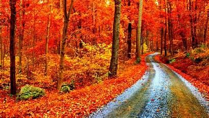 Fall Backgrounds Laptop Forest Desktop Wallpapers Autumn