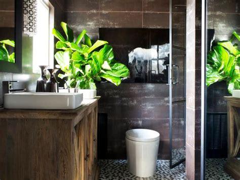 decorate  bathroom  plants hgtvs
