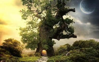 Tree Oak Wallpapers Desktop Cave Planet