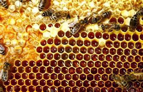 cr馘ence cuisine ardoise carrelage nid d abeille carrelage nid d 39 abeille effet m tal bross forest