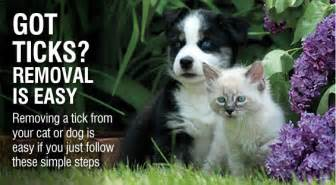 how to remove a tick from a cat how to remove a tick safely removing ticks from dogs