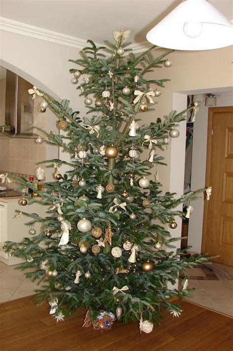 the amazing life of christmas trees part ii passion in