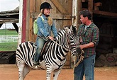 Racing Stripes (2005) – This is a Real Film | Fantastic Fools