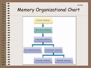 Human Blood Types Chart Memory