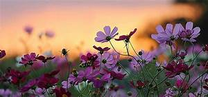 Beautiful Scenery Of Flowers | www.pixshark.com - Images ...