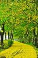 阿勃勒盛開 全台5處賞花景點大公開 - MOOK景點家 - 墨刻出版 華文最大旅遊資訊平台