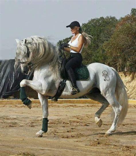 Azteca Andalusian Horse