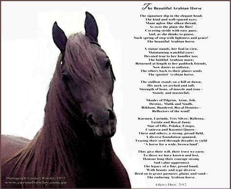 horse poems quotes horses famous sayings quotesgram poem explore equestrian ridings done authors discover collection riding animal motivational know he