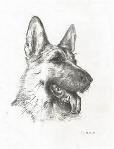Drawing Dog German Shepherd U00b7 Free Image On Pixabay