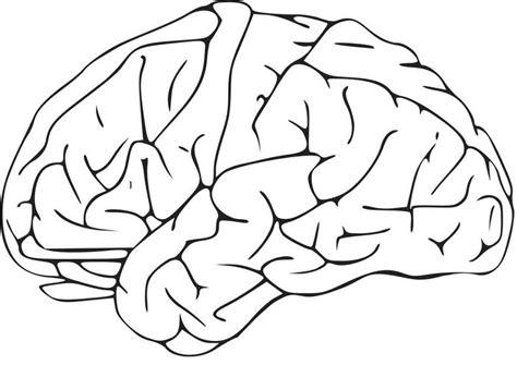 Hersenen Kleurplaat kleurplaat hersenen afb 16581