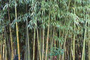 Gartenzaun Höhe Zum Nachbarn : lebender zaun als sichtschutz diese pflanzen kommen infrage ~ Lizthompson.info Haus und Dekorationen