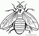 Coloring Pages Fly Bugs Printable Bug Sheet Sheets Insects Flies Printables Animal Guy Letscolorit Super Getcoloringpages sketch template