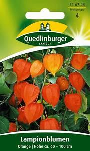 Kokos Blumenerde Für Welche Pflanzen : lampionblumen 516743 quedlinburger saatgut mbh ~ Orissabook.com Haus und Dekorationen