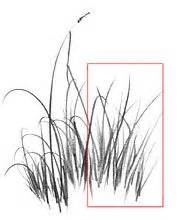 How to Draw Grass, Step by Step, Other, Landmarks & Places ...