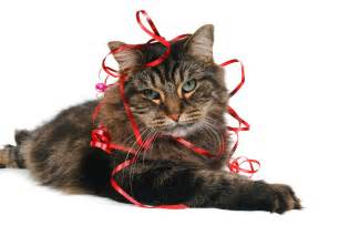 cat ribbon 301 moved permanently