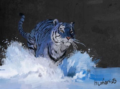 Best Images About Maltese Tiger Pinterest