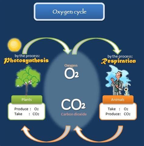 educative diagrams oxygen cycle diagram