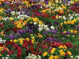 flower, beautiful, Flower, garden, landscape, nature ...
