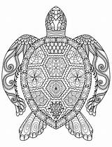 Coloring Pages Adult Animals Turtle Adults Animal sketch template