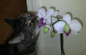 are orchids poisonous to cats plants poisonous to cats orchids