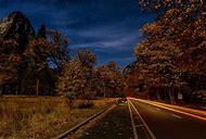 Autumn Trees at Night