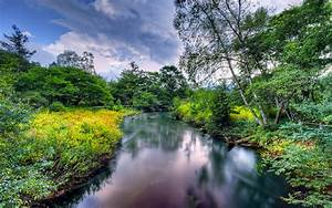 River, In, Summer, Coast, Trees, Meadow, Flowers, Nature