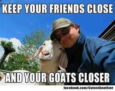 Isis Goat Memes - 336 best images about i miss my goats on pinterest