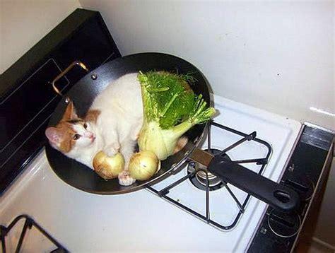 cuisiner de a à z cuisiné drôle sur mignon com