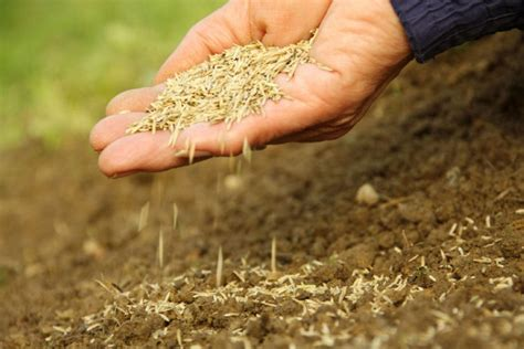 sowing seeds images start your garden picture how good it will be toronto star