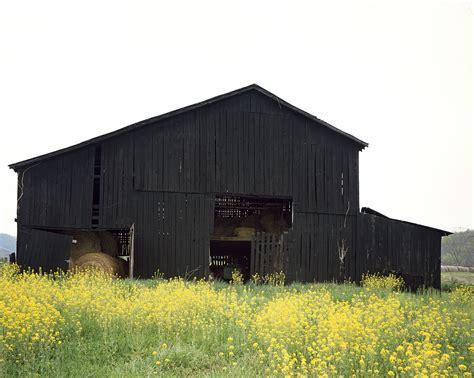 A Traditional Black Kentucky Tobacco Barn