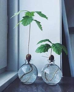 Bonsai Im Glas : b ume im glas topf garden gardening gardendesign decor decoration hydroponicsplants ~ Eleganceandgraceweddings.com Haus und Dekorationen