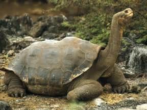 Tortoise Marine Wiki Fandom Powered By Wikia