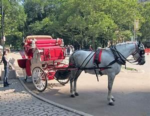 Central Park Auto : the horses of central park skibbereen eagleskibbereen eagle ~ Gottalentnigeria.com Avis de Voitures