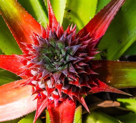 images gratuites la photographie fruit feuille fleur