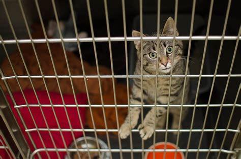 gabbie gatti le migliori gabbie per gatti gatto