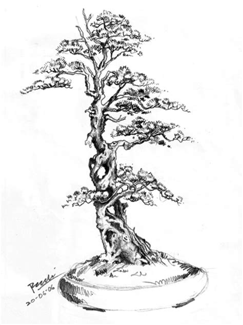 The Art of Bonsai Project - Feature Gallery: Illustrations