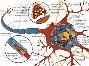 Red  Bloodshot  Discipline  Diagram  Drawing  Science