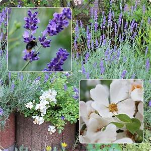 Mein Schöner Garten Mondkalender 2017 : minig rtchen 2017 teil 3 sommer mein sch ner garten forum ~ Whattoseeinmadrid.com Haus und Dekorationen