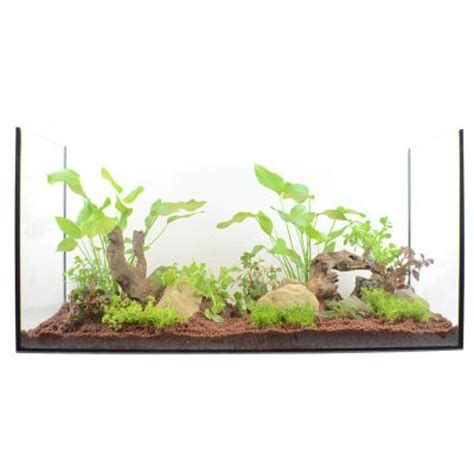 lot de plantes pour aquarium de 100 224 120 cm zooplus be