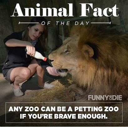 Facts Animal Funny Pee Might Imgur