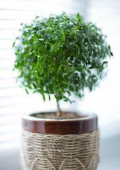 Plante Pour Appartement : engrais plante ooreka ~ Zukunftsfamilie.com Idées de Décoration