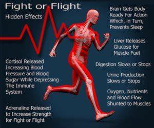 prevent heart disease  fight  flight hormonal