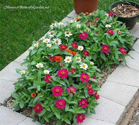 butterfly plants list butterfly flowers  host plant
