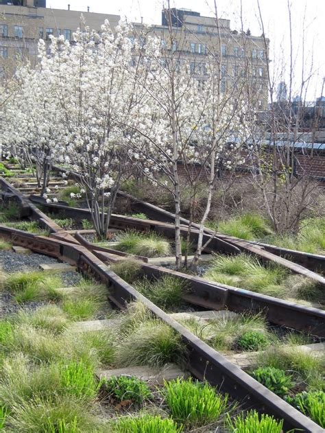 The Highline On Ttl Design Landscaping Dilapidated