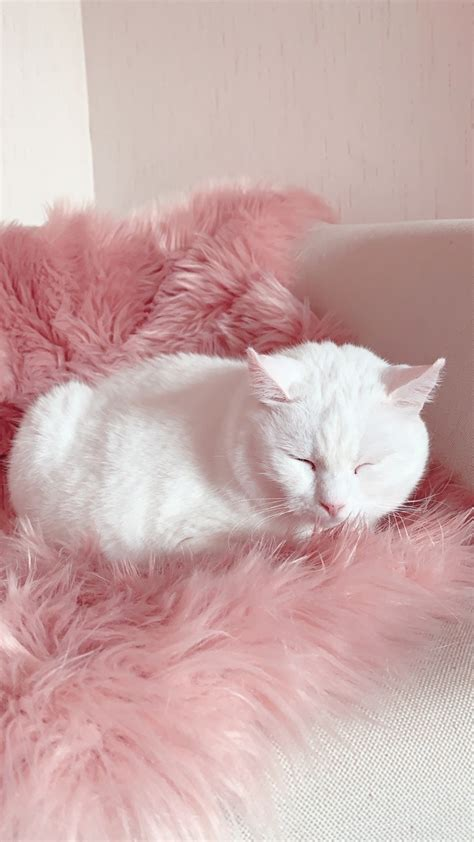 1 pink cat aesthetic cat aesthetic pink cat