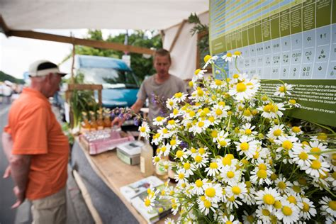 umweltfestival fair food bike
