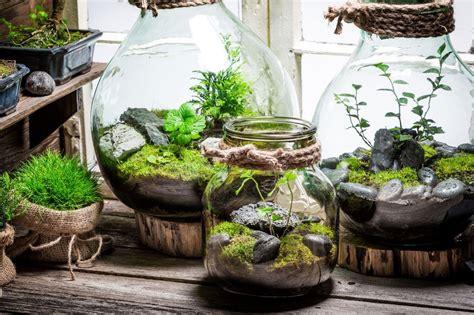 ชุดจัดสวนขวด & ต้นไม้ที่คุณควรนำไปปลูกในขวดแก้ว - ALT ...
