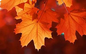 This, Company, Will, Give, You, 1, For, Every, Fall, Leaf, You, Send, Them